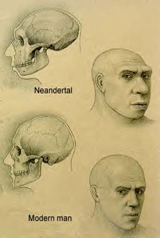 comparing and contrasting neanderthals and modern Modern humans survived neanderthals didn't here's one factor that might have contributed to their demise.
